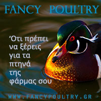 Fancypoultry